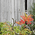 Old Barn In Fall by Keith Webber Jr