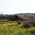 Old Barn In Sonoma California 5d22234 by Wingsdomain Art and Photography