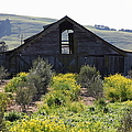 Old Barn In Sonoma California 5d22236 by Wingsdomain Art and Photography