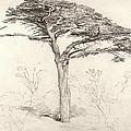 Old Cedar Tree In Botanic Garden Chelsea by Samuel Palmer