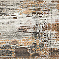 Old Painted Wood Abstract No.1 by Elena Elisseeva