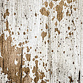 Old Painted Wood Abstract No.3 by Elena Elisseeva