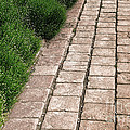 Old Pavers Alley Print by Olivier Le Queinec