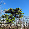 Old Rag Hiking Trail - 121242 by DC Photographer