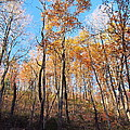 Old Rag Hiking Trail - 121258 by DC Photographer