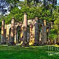 Old Sheldon Church Ruins In South Carolina by Reid Callaway