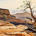Old Tree at the Canyon Print by Paul Krapf