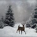 On A Snowy Evening by Lianne Schneider