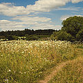 On The Summer Meadow II. Russia by Jenny Rainbow