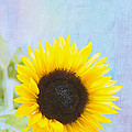 One Sunflower by Kay Pickens