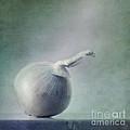 Onion by Priska Wettstein