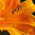 Orange Rain by Karen Wiles