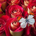 Orange Tip Butterfly by Garry Gay