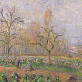 Orchard At Pontoise by Camille Pissarro