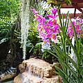 Orchid Garden by Carey Chen