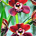 Orchid Rusty by Marty Koch