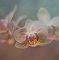 Orchids In The Mist by John Kain