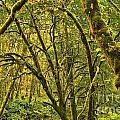Oregon Rainforest Print by Adam Jewell