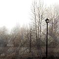 Oregon Winter by Carol Leigh