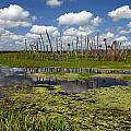 Orlando Wetlands Cloudscape 2 by Mike Reid