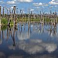 Orlando Wetlands Cloudscape 5 by Mike Reid