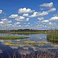 Orlando Wetlands Park Cloudscape 4 by Mike Reid