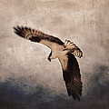 Osprey Over The Columbia River by Carol Leigh
