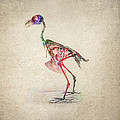 Osteology Of Birds by Aged Pixel