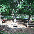 Our Woodland Glade