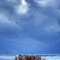 Outer Banks - Driftwood Bush On Beach In Surf II by Dan Carmichael