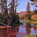 Outstanding Yellowstone National Park by John Malone