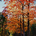Over The Hill And Through The Trees by Jeff Folger