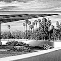Overhang Bw Palm Springs by William Dey
