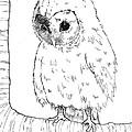 Owl Baby by Callan Rogers-Grazado