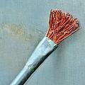 Artist Paint Brush
