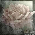 Pale Rose Photoart by Debbie Portwood