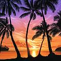 Palm Beach Sundown by Andrew Farley