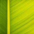 Palm leaf macro abstract Print by Adam Romanowicz