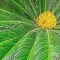 Palm tree with blossom Print by Dragomir Nikolov