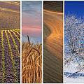 Palouse Seasons by Doug Davidson