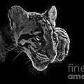 Panting Beauty by Ashley Vincent