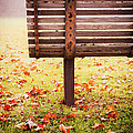 Park Bench In Autumn by Edward Fielding