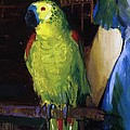 Parrot by George Wesley Bellows