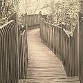 Pathway by Melissa Petrey