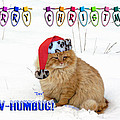 Paw Humbug by Robyn Stacey