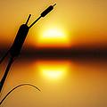 Peaceful Dawn by Bob Orsillo