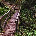 Peaceful Path by Loree Johnson