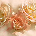 Peach Roses In The Mist by Jennie Marie Schell