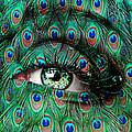 Peacock by Yosi Cupano