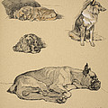 Peke, Collie, Spaniel And German Boxer by Cecil Charles Windsor Aldin